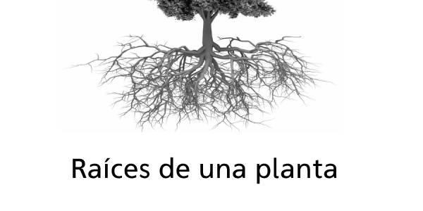 Raíces de una planta