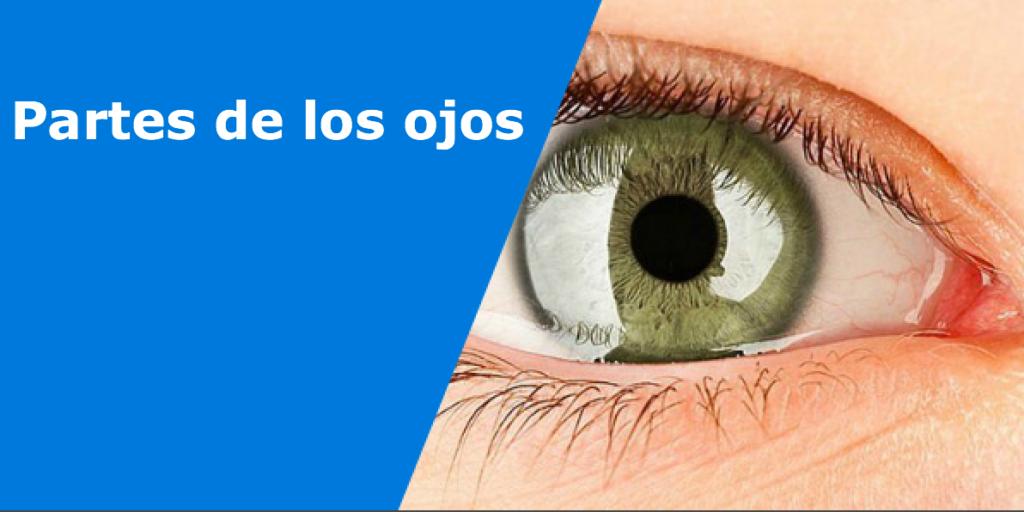 Partes de los ojos